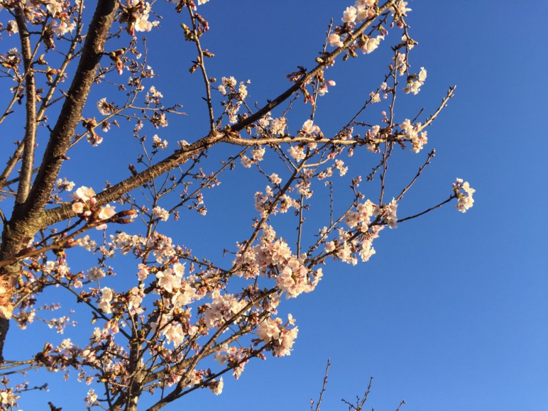■ 春の訪れは確定申告と共に